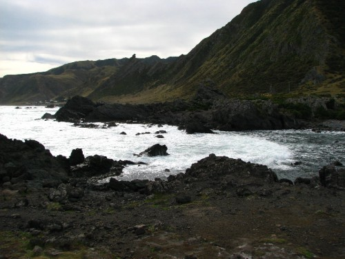 Seal on shore at Cape Palliser New Zealand