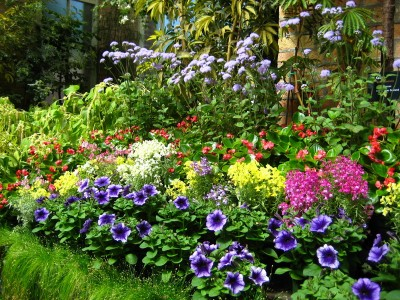 Variety of Flowers in the Winter Garden, Auckland, New Zealand